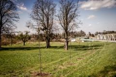 Sadzenie drzew na Zielonej-19