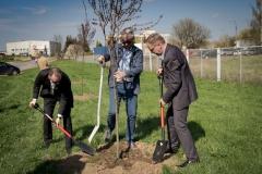 Sadzenie drzew na Zielonej-43