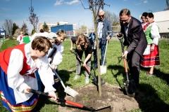 Sadzenie drzew na Zielonej-58