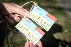 Sadzenie drzew na Zielonej-8
