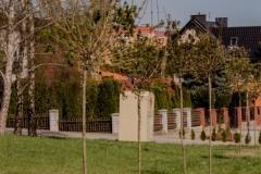 drzewa-17