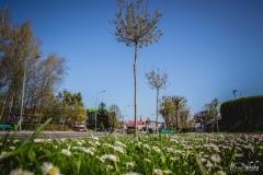 drzewa-2