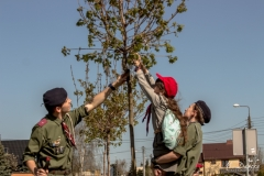 drzewa-26