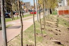 drzewa-41