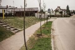 sadzenie drzew-29