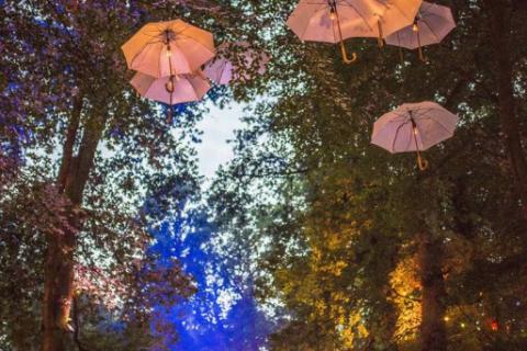 Extern-Freizeit-Kultur-Sport-Auftrag-Konietzny-Appletree-Schirme-im-Baum-16-