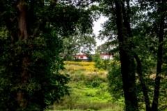 park (18 of 30) — kopia