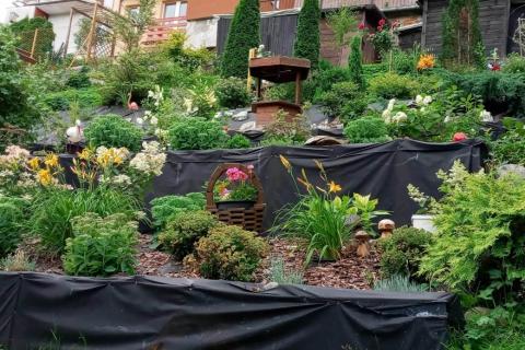 16-Rosami-ogród