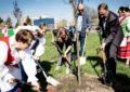 500 nowych drzew rośnie już w Starogardzie
