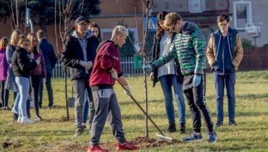 Kolejne 500 drzew zdobi Starogard