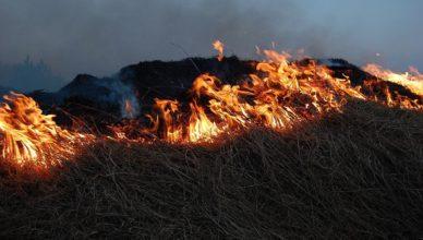 Nawet 5000 złotych za spalanie trawy i gałęzi na działkach