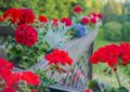 Pochwal się swoim balkonem, tarasem lub ogrodem