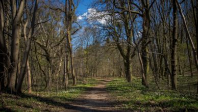 Lasy i parki otwarte od poniedziałku