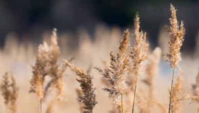 Nie pal traw i odpadów biodegradowalnych