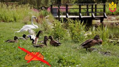 Nie dokarmiaj ptaków chlebem!