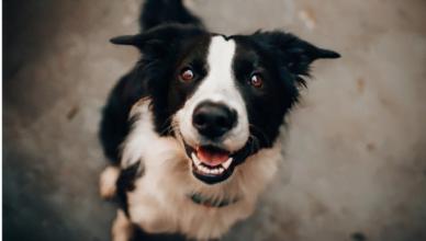 Twój pies, Twój obowiązek